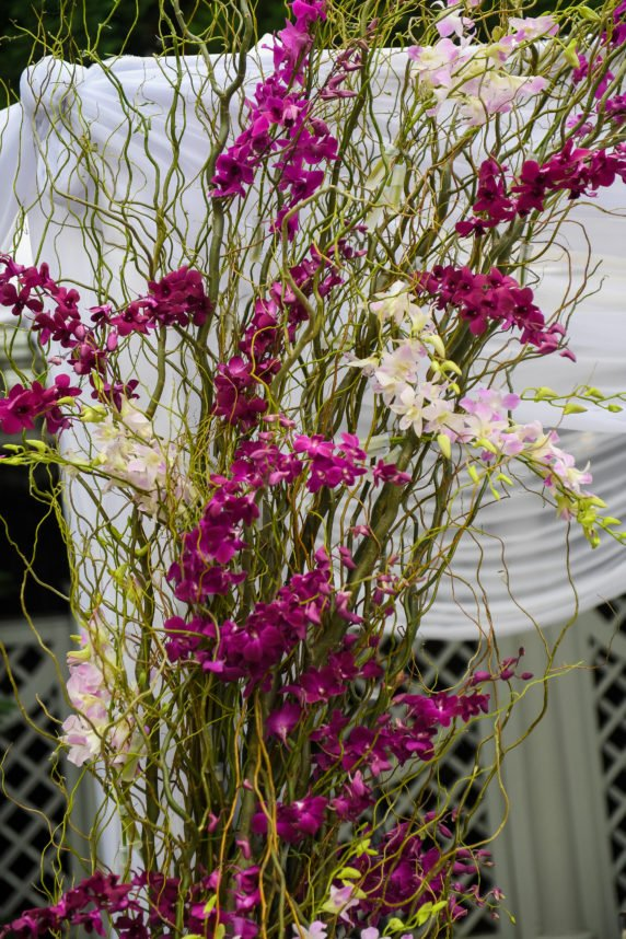 Dendrobium Orchid Wedding Arch
